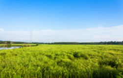 Blurry Green rice field Royalty Free Stock Photos