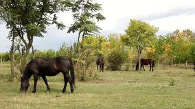Blurry Horse  in the pasture Royalty Free Stock Photography