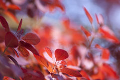 Blurry Leaves Background Stock Photography