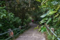 A blurry man walking through pathway in the middle of the wood of Gede Pangrango Mountain stock images