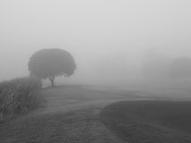 The blurry moment of the fog on the field. Fog is full, the vision is blur Royalty Free Stock Image
