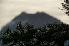 Blurry mountain silhouette with pine branch in foreground royalty free stock photo