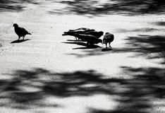 Blurry pigeons silhouettes and shadows on the city street stock images
