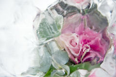 Blurry pink flower Royalty Free Stock Images