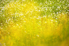 Blurry sunny meadow Royalty Free Stock Photography