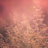 Blurry sunset color meadow Royalty Free Stock Photography