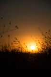 Blurry sunset with gras Royalty Free Stock Photo