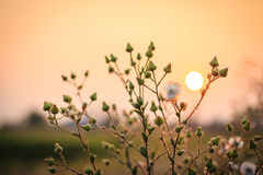 Blurry sunset with grass. Stock Photos