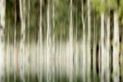 Blurry trees by water. With reflection Royalty Free Stock Photo