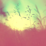 Blurry vintage meadow Royalty Free Stock Photos