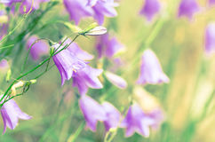 Blurry vintage meadow stock images