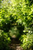 Blurry walkway at summer park with green leaves Royalty Free Stock Image