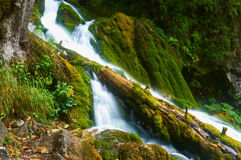 Blurry waterfall with the fallen tree royalty free stock photo