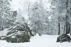 Blurry winter mountain forest in cloudy frosty weather stock image