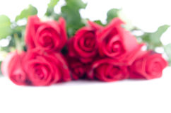 Blurs Rose flower flora happy valentine on white background Royalty Free Stock Photo