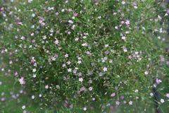 Blury-Rosa-Blumenhintergrund Stockfotos