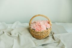 Blush flowers of carnation in a basket. Blush flowers in a rattan baske on the table with beige runner Stock Image