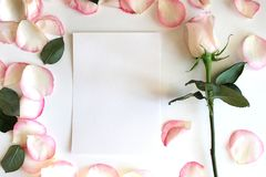 Blush pink Rose and Petals. Vertical blank paper Mockup. Wedding, romantic template. Background, flat lay, template Stock Photography