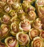 Blush roses for wedding bouquet. Vintage wedding decoration made of blush roses Royalty Free Stock Image
