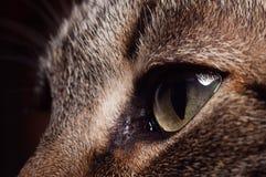 Blush's ogen. Stock Fotografie