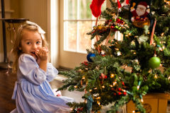Blushing Over The Christmas Tree. Little Girl Admiring The Christmas Tree Stock Images