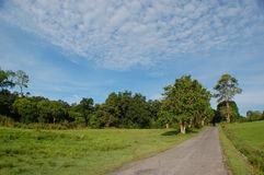 Blusky day in big park. Blusky day in Khao Yai National Park Thailand Royalty Free Stock Image