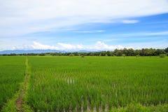 Blusky padieveld witte wolk Stock Fotografie