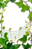 Bluszcz klepka rabatowa i uświęcona muzykalna. Obraz Royalty Free