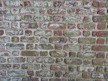 Bluszcz na ściana z cegieł Zdjęcia Stock