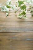 Bluszcz na drewno stole Obrazy Stock