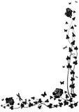 bluszcz róże ilustracji