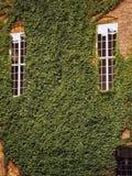 Bluszcz r na ścianie stary budynek zdjęcia royalty free