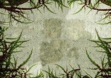 Bluszcz rama z kopii przestrzenią na ściennej teksturze Obrazy Stock