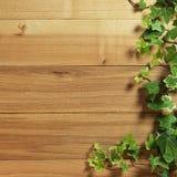 Bluszcz roślina na stole twarde drzewo Zdjęcia Royalty Free