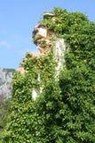 bluszcz ruiny Fotografia Royalty Free