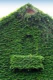 Bluszcz zakrywający budynek Zdjęcia Royalty Free