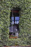 Bluszcz Zakrywający okno Fotografia Royalty Free