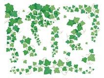 Bluszcz zieleni liście Wiszące pełzacz rośliny gałąź Gronowy liścia pięcie na ogród ściany wektorze ustawia odosobnionego na biel ilustracji