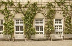Bluszcza ogród Fotografia Stock