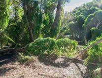 Bluszcza ogród obraz stock