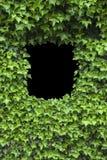 bluszczy ramowi zieleni liść Obraz Royalty Free