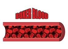 Blut-Boxer Blutzellen in der Form von Boxhandschuhen Stockbild