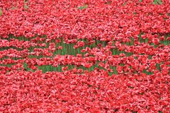 Blut fegte Länder und Meere von roten Mohnblumen Lizenzfreie Stockbilder