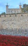 Blut fegte Länder und Meere von roten Mohnblumen Stockfoto