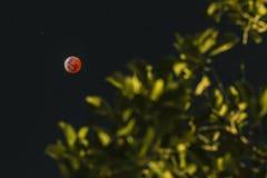 Blut-Mond am 20. Januar 2019 lizenzfreie stockfotografie