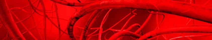Blutgefäße Vektorabbildung (ENV v lizenzfreie abbildung