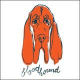 Bluthundhundevektorillustration Lizenzfreies Stockbild