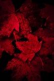 Blutige Blätter Stockbild