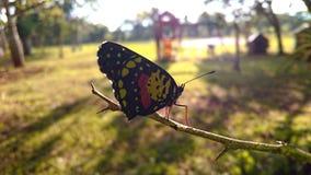 Blutterfly en el campo Imagen de archivo