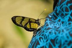 Blutterfly en una selva tropical fotografía de archivo libre de regalías